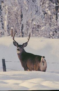 Canada's best source for B&C Whitetail hunts. Canada's top whitetail outfitters from Saskatchewan, Alberta, Manitoba, British Columbia, and the Eastern provinces